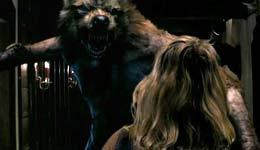 Wolf_2
